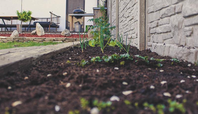 Nachhaltigkeit: 3 Vorteile vom eigenen Gemüse im Garten